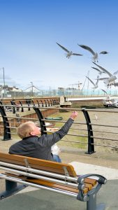 shoreham-coronation-green-seagulls-being-fed
